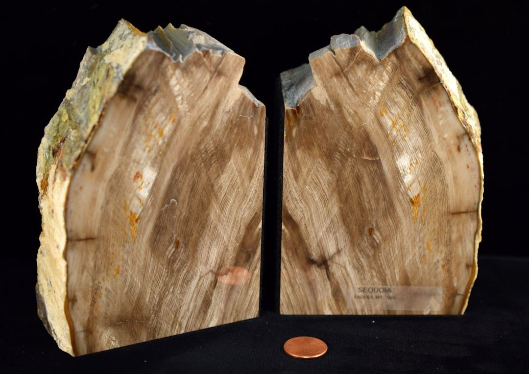 Hd0257 Petrified Wood Bookends (SOLD)