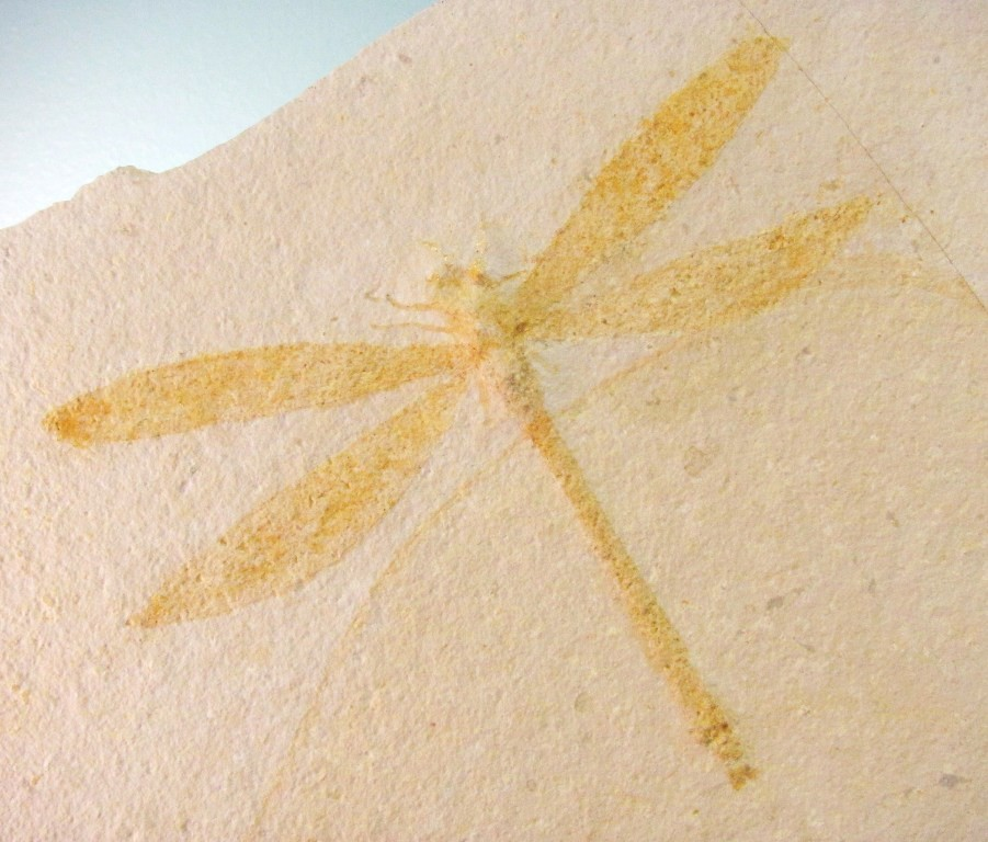 F0074 - Fossil Dragonfly from Germany