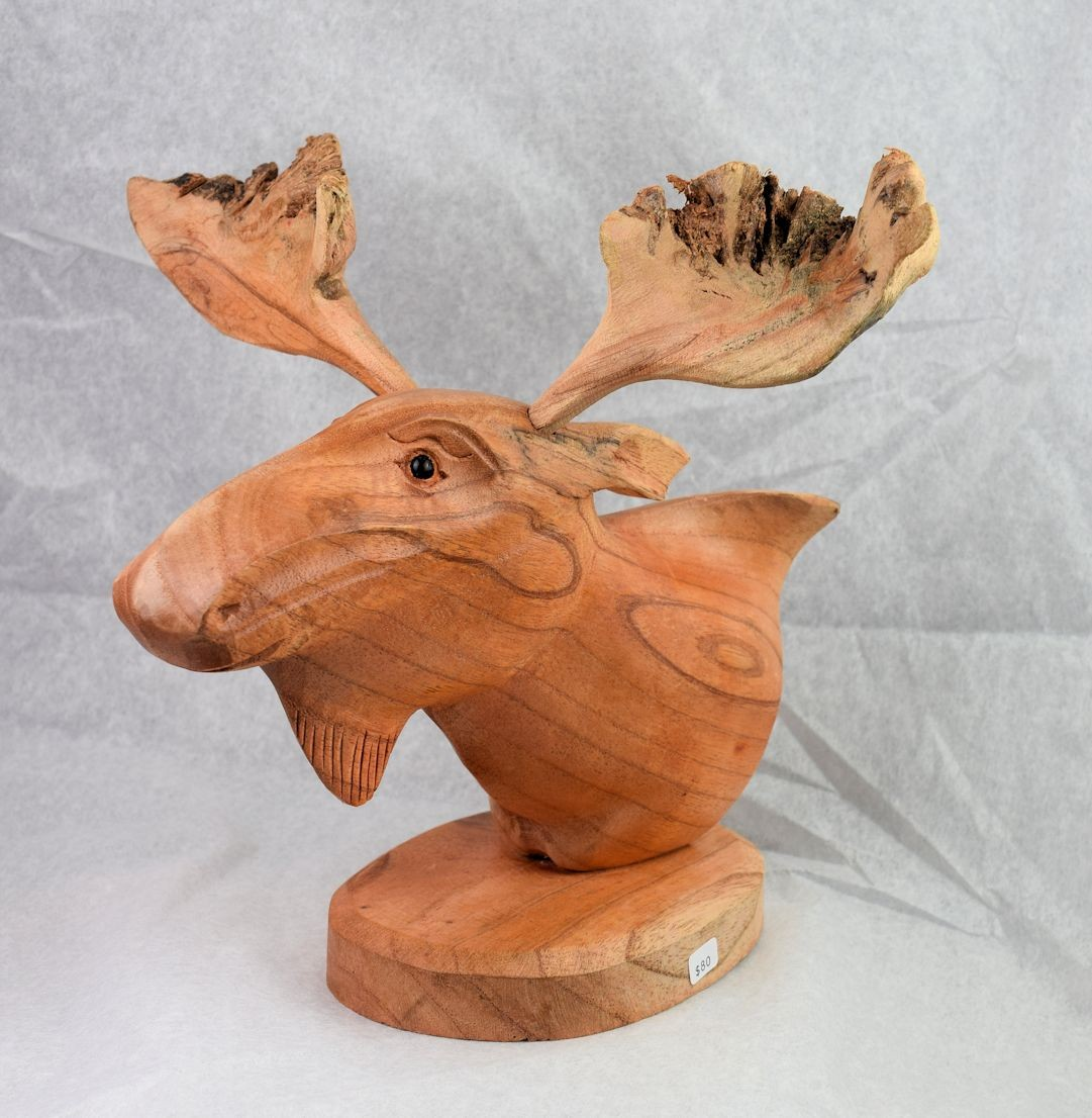 HD0306 Chinaberry Wood Moose Head with Mistletoe Scars (SOLD)