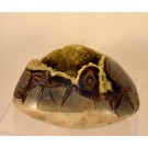 HD0282 Septarian Concretion
