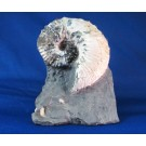 F0083 - Fossil Ammonite on Matrix (SOLD)