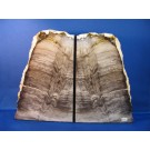 HD0016 Petrified Wood Bookends from Washington (SOLD)