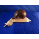 HD0157 - Chinaberry Wood Snail (SOLD)