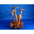 HD0158 - Chinaberry Wood Mushrooms with Mistletoe Scars (SOLD)