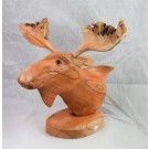 HD0306 Chinaberry Wood Moose Head with Mistletoe Scars