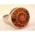 RS0142 Sterling Silver Ammonite Ring